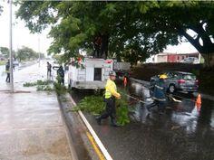Árbol obstaculizó la autopista Valencia-Tocuyito tras fuertes lluvias (+foto)