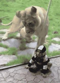 This tiny ranger: