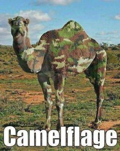 Funny pictures about How To Lose Your Camel. Oh, and cool pics about How To Lose Your Camel. Also, How To Lose Your Camel photos. The Funny, Funny Drunk, Drunk Texts, Funny Stuff, Funny Animal Memes, Funny Animals, Funny Memes, Memes Humor, Costumes