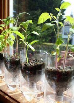 Como fazer um vaso de plantas com garrafa pet que rega a planta sozinho - Instituto Ecoação