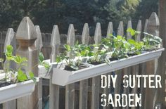 Gardening in rain gutters! How to grow strawberries, lettuce, or herbs on a fence.