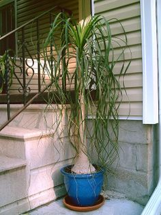 3 Houseplants for Water Conservationists