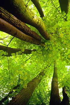 looking up through the tree tops / amazing nature photography Foto Nature, All Nature, Amazing Nature, Science Nature, Beautiful World, Beautiful Places, Tree Forest, Jolie Photo, The Great Outdoors