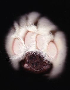 Lil Ashton - scanography - scannography - ScanArt - Scanner Art Tap the link for an awesome selection cat and kitten products for your feline companion! Cat Photography, Still Life Photography, Sailor Moon Cat, Tiger Love, Pet News, Cat Wallpaper, Cat Sleeping, Funny Cat Memes, Cat Paws