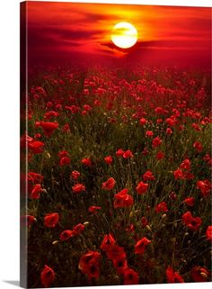 Beautiful Nature Pictures, Beautiful Nature Wallpaper, Amazing Nature, Beautiful Landscapes, Beautiful World, Beautiful Flowers, Flowers Nature, Beautiful Sunset, Beautiful Nature Photography