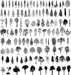 Tree silhouettes vector on VectorStock®
