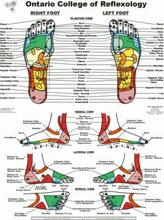reflexology chart and video - hip & knee pain relief