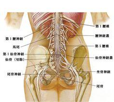 海陽堂鍼灸治療院 難病 東洋医学 坐骨神経痛は胃腸から