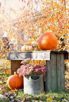 So pretty!  Old wood bench, mums in a galvanized bucket, pumpkins....love it.