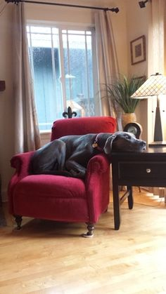 It's Monday again #dogs #greatdane