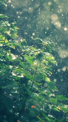 Summer Rainy In Sunny Day  #iPhone #5s #Wallpaper