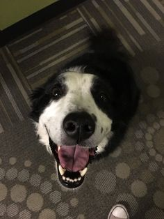 I want to find someone that looks at me the same way my neighbor's collie looks at everyone he meets http://ift.tt/2r3kiuc