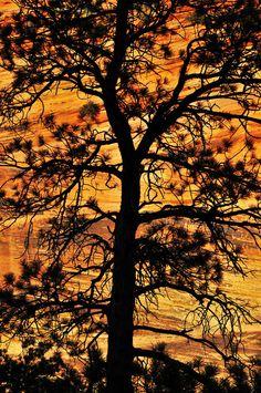 Zion National Park, Utah © 2011 Skip Hunt