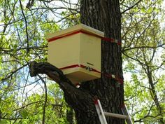 Swarm Traps and Bait Hives | Natural Beekeeping