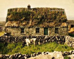 Thatched Roof Cottage with Cow, Ireland Irish Landscape, Ireland Landscape, Landscape Design, Landscape Photography, Travel Photography, Art Photography, Irish Cottage, Thatched Roof, Strand