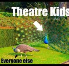 Peacocks are the theatre kids of the animal world. Honestly Though<<<<<<gotta love the theatre peacock Theatre Jokes, Drama Theatre, Theatre Problems, Theatre Nerds, Music Theater, Broadway Theatre, Musicals Broadway, Theater Quotes, Kid Memes