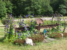 Old rake 'n morning glories - Garden Junk Forum - GardenWeb