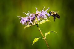 The U.S. Bans GMOs, Bee-Killing Pesticides in All Wildlife Refuges -- The Fish and Wildlife Service will phase out genetically engineered crops and neonicotinoids by 2016.