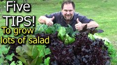 5 Tips How to Grow a Ton of Salad in Just One Raised Garden Bed or Container - YouTube