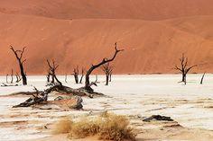 #Namib Desert #Africa