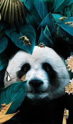 Illustrations Discover Animals And Pets Cute Animals Panda Wallpapers Panda Love Panda Bear Tier Fotos Animal Wallpaper Art Design Illustrations And Posters Lion Wallpaper, Cute Wallpaper Backgrounds, Animal Wallpaper, Most Beautiful Animals, Majestic Animals, Beautiful Creatures, Panda Wallpapers, Cute Wallpapers, Cute Baby Animals
