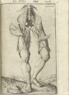 Tab. XXXI. Lib. IV. Adriaan van de Spiegel…