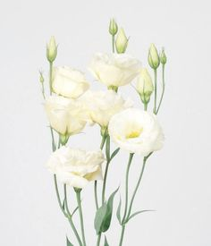 white lisianthus -Getting married in April? See our seasonal flowers board for a full list of flowers that are available for florists to buy in April for a Spring/ early summer wedding. Whether you are planning a romantic, wild and natural bouquet or bright and vibrant table centrepieces - our month by month boards cover every possibility for every month be it Winter, Spring, Autumn or Summer! xx