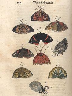 Ulisse Androvandi, fromDe animalibus insectis, 1602