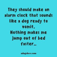 Especially since I don't have a dog!