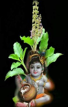 Krishna n Tulasi ⭐️ Krishna Leela, Krishna Hindu, Bal Krishna, Jai Shree Krishna, Cute Krishna, Radha Krishna Pictures, Lord Krishna Images, Krishna Photos, Hanuman Chalisa