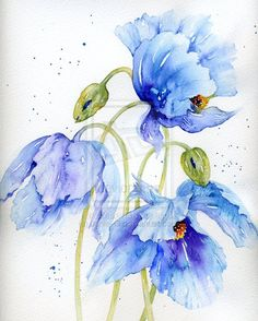 Himalayan Poppies by Janie-G on deviantART