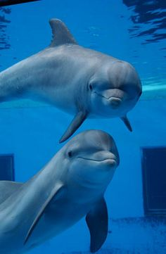 the dolphins at Brookfield Zoo IL