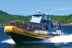 Whale-Watching Tour from Vancouver - TripAdvisor