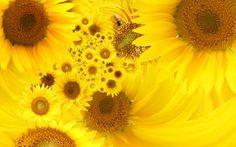 Amarillo de Girasoles