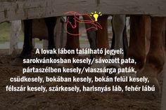 #lovak #jegyek #fehérlábú #nyeregbefel #érdekesség