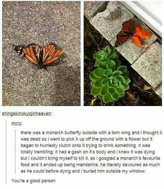 """(I've done this aswell....some times I wonder why they live such beautiful and fragile life's but then I remembered they live short loves to fill ours with a glimpse of hope and beauty that even though life is filled with hardships just give your """"wings"""" a little flap and you might just find the perfect flower.-ks)"""