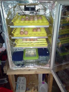 Mini fridge incubator!