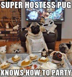 Pug hostess at party
