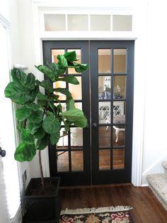 plant, decor, tiffanyd, black doors, fiddl leaf, fiddle leaf fig tree, foyer, hous, black french doors