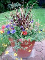 """Container flower """"Recipes"""".  This site gives you the name of the flowers and plants used for each pic."""