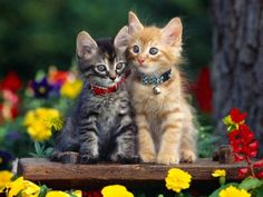 Gatos malhados