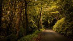 природа,лес