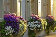 Inspiration Pack Containing 23 of the World`s Most Beautifully Flowered Balcony Gardens