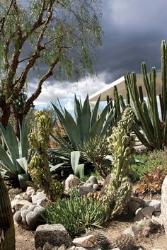 Artists Roy Dowell and Lari Pittman's Los Angeles garden and home, which includes a Richard Neutra-designed guest house. Among the garden's many succulents and cacti are Cereus peruvianus 'Monstrosus,' Agave americana, and C. Succulent Landscaping, Backyard Landscaping, Landscaping Ideas, Cacti And Succulents, Planting Succulents, Drought Tolerant Landscape, Dry Garden, Xeriscaping, Desert Plants