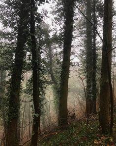 All the colors of the foggy forrest at Disibodenberg #rhein #naher #glan #hildegardvonbingen #disibodenberg #theater #research #thisaintartschool