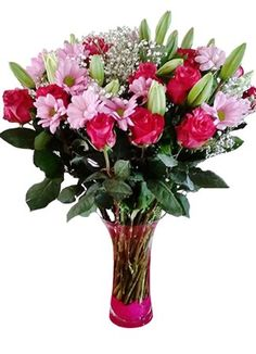 Gauteng Central Anniversary Gifts & Flowers for all occasions. Anniversary Flowers, Anniversary Gifts, Amelia, Glass Vase, Plants, Birthday Presents, Wedding Anniversary Gifts, Plant, Birthday Gifts