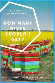 New to beekeeping? How many hives should you have when you are a beginning beekeeping? #beekeeping #beehives #beekeeper