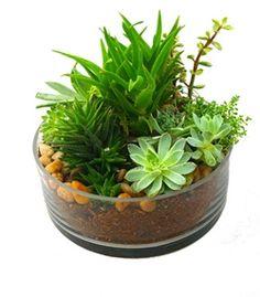 Succulent Dish Garden by Cactus Flower in Phoenix, AZ  $64.99