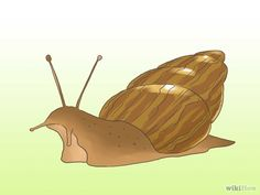 How to take care of a pet snail