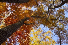 Colors against Fall sky - by Troy White